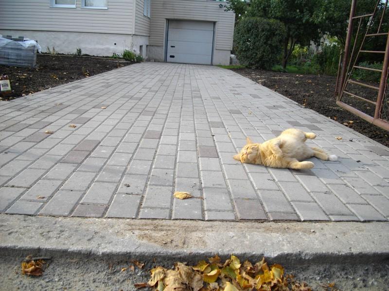 kass eelistab tänavakive